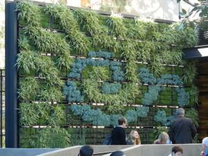 Living Wall at Starbucks at Downtown Disney